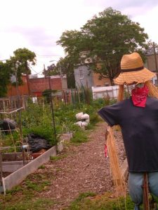 The Kings Court community garden is tucked behind Hill East's residential streets.