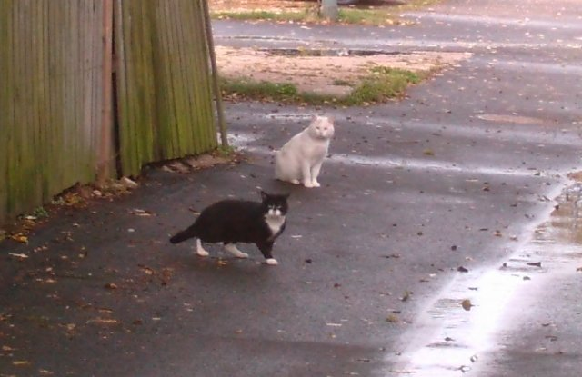 A couple of the rat-busting SWAT team members linger around off-the clock. Hill East's feral cats are rarely seen during the day but run the streets at night.